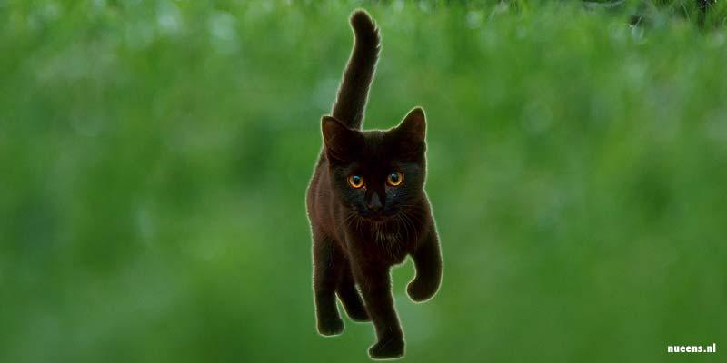 Ook zwarte katten zouden ongeluk kunnen brengen