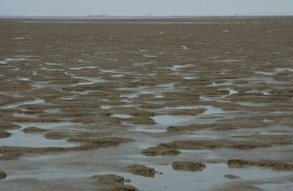 Waddenzee wordt werelderfgoed, De Wadden onder de Friese zeedijk